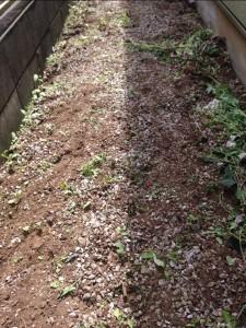 5月の草刈りは、第2領域だ。あとで、悲惨な草刈りをしないために。