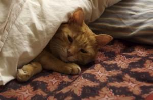 睡眠の質を低下させたくないからって、子どもと一緒に寝ないだなんて、あり得ないでしょ
