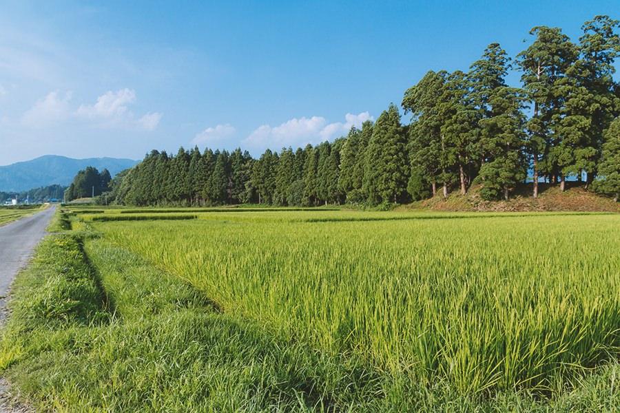 不便だからこそ、誰かの仕事や居場所がある。手間暇をかけて、仕事や居場所を作りつつ、価値ある農作物を!