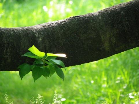 親が代わりにやって成長の芽を摘むのか、褒めて伸ばすのか